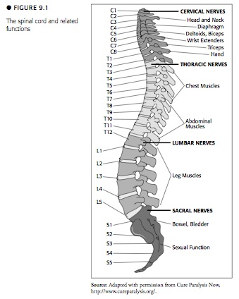 diagram of cervical spine and nerves